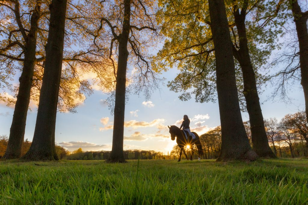 Fotoshoot paard en ruiter met zonsondergang.