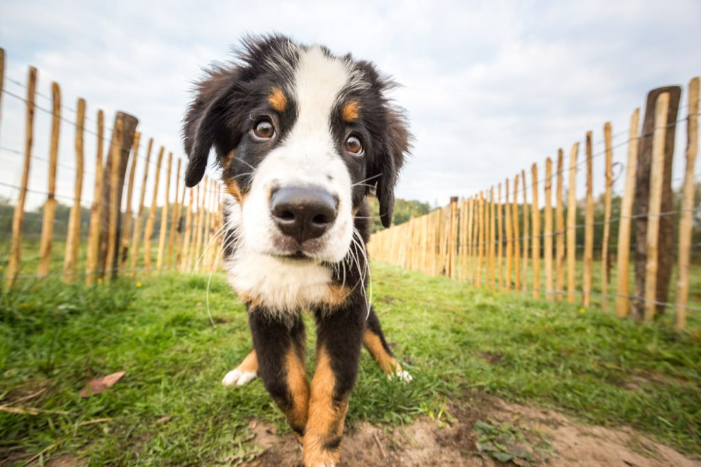 Fotoshoot of fotoreportage huisdier, hond of paard op locatie.