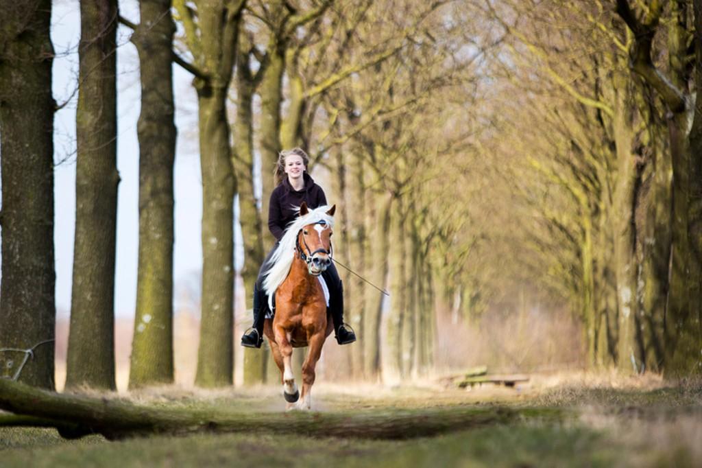 Paard en ruitster