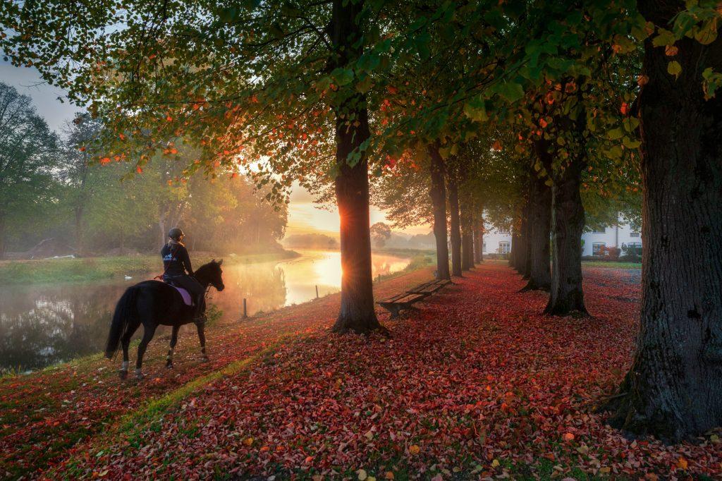 Kunstzinnige fotoshoot paard.