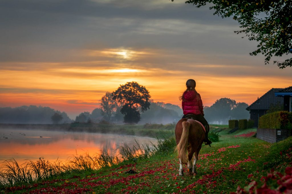 Fotoshoot paard en ruiter.