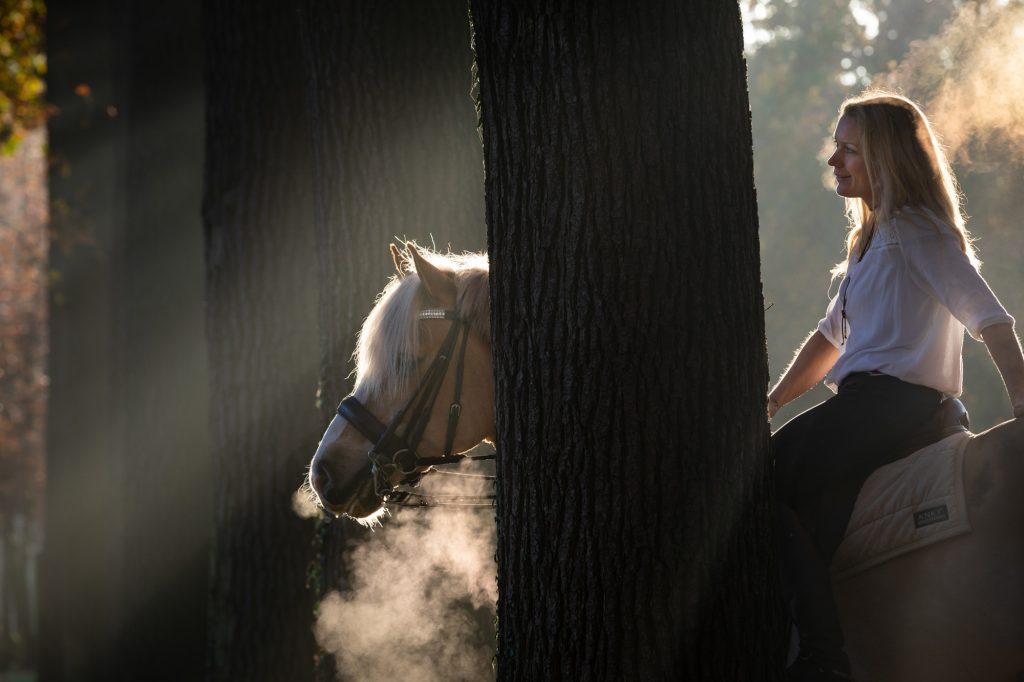 Portret paard en ruiter.