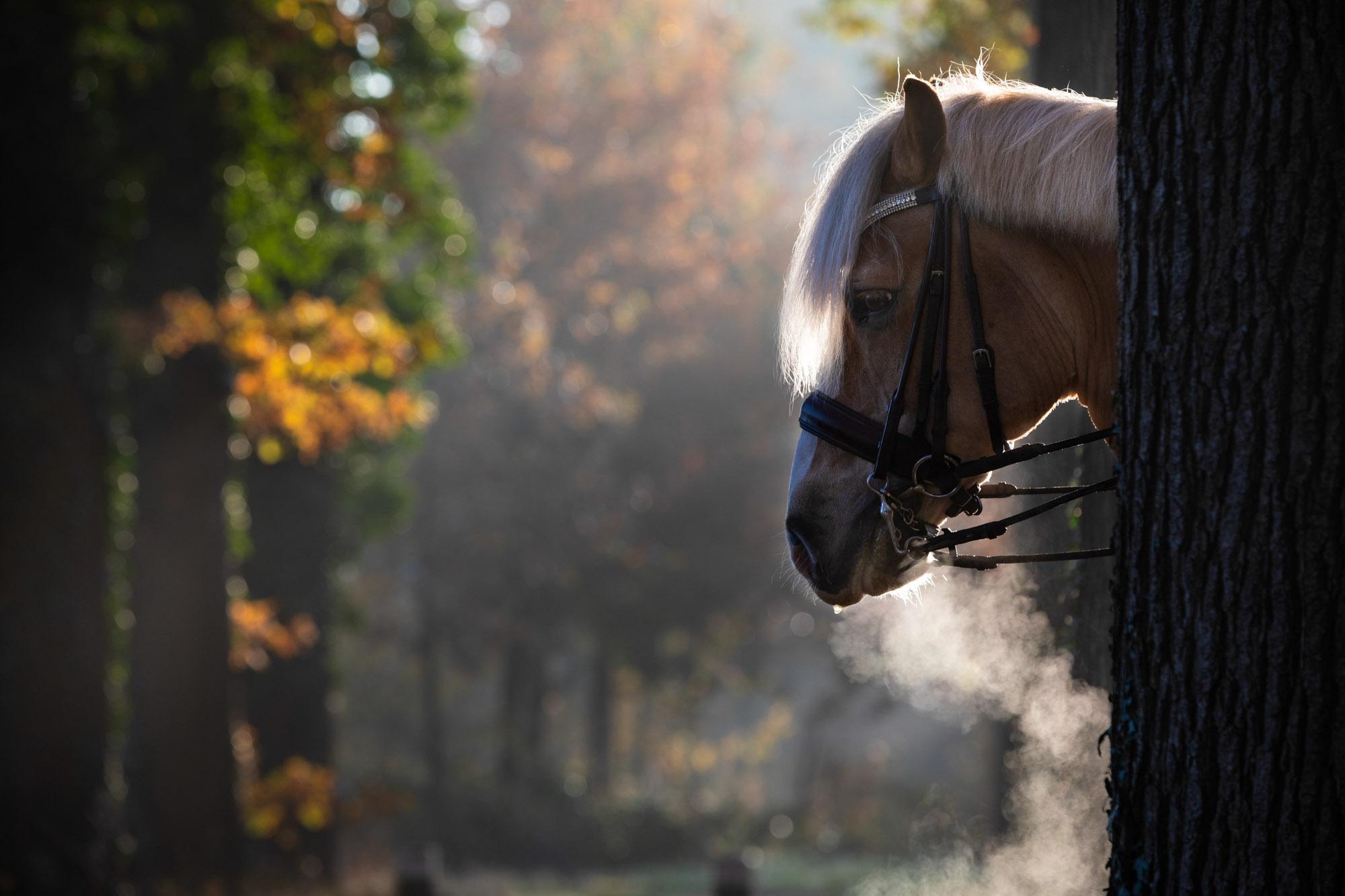Portret paard.