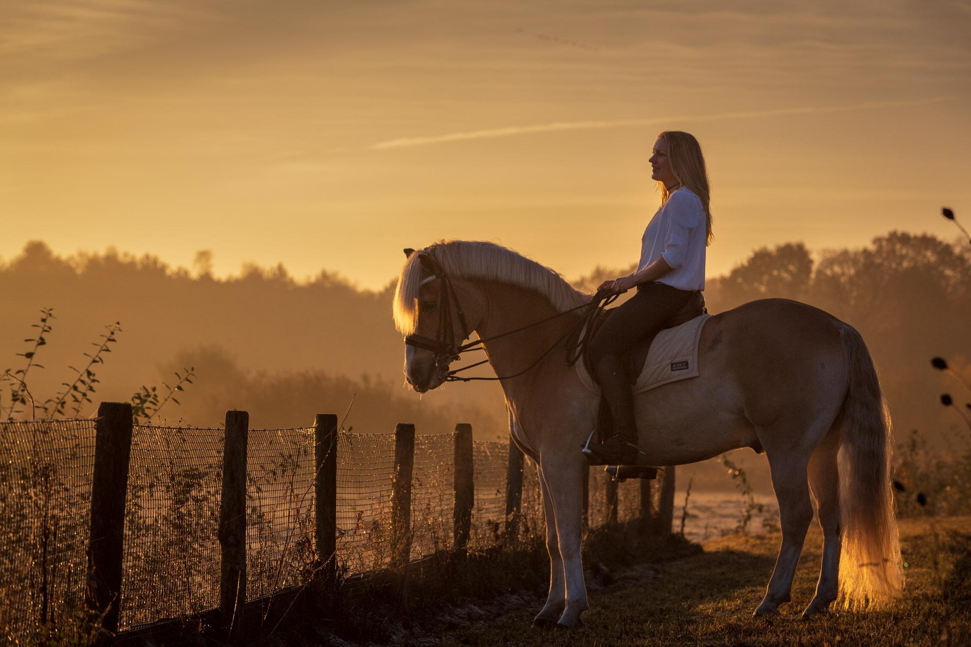 Fotoshoot van een paard.