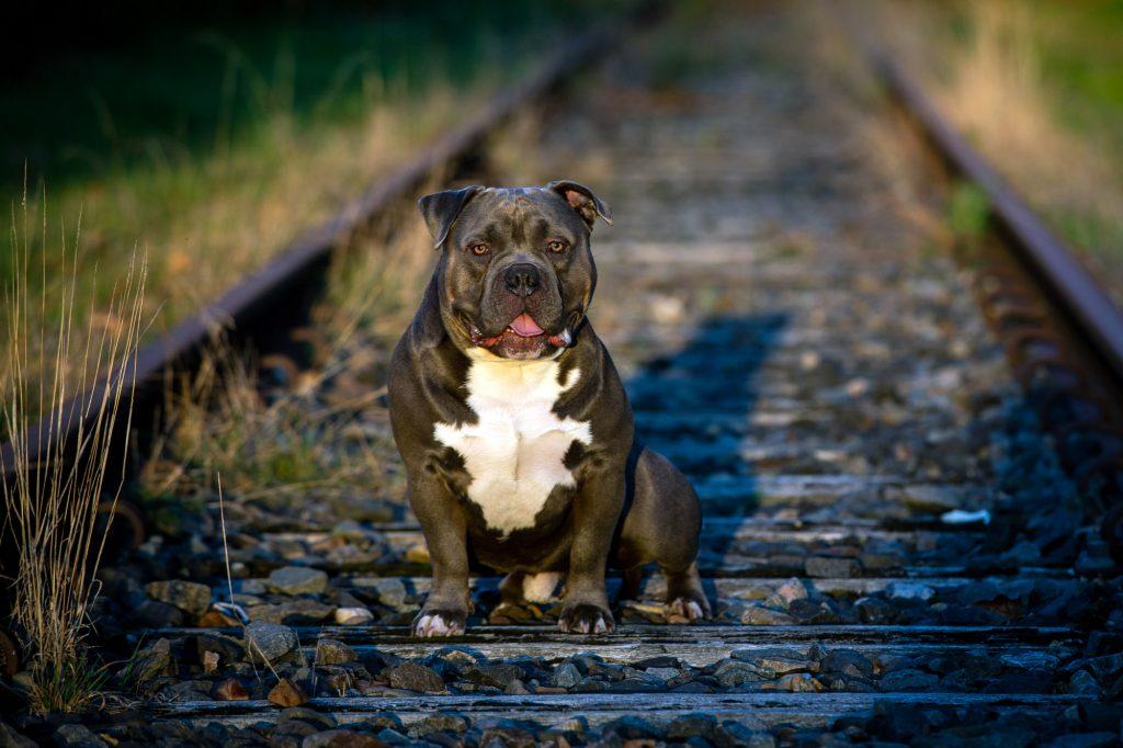 Fotoshoot hond stoere industriële locatie.