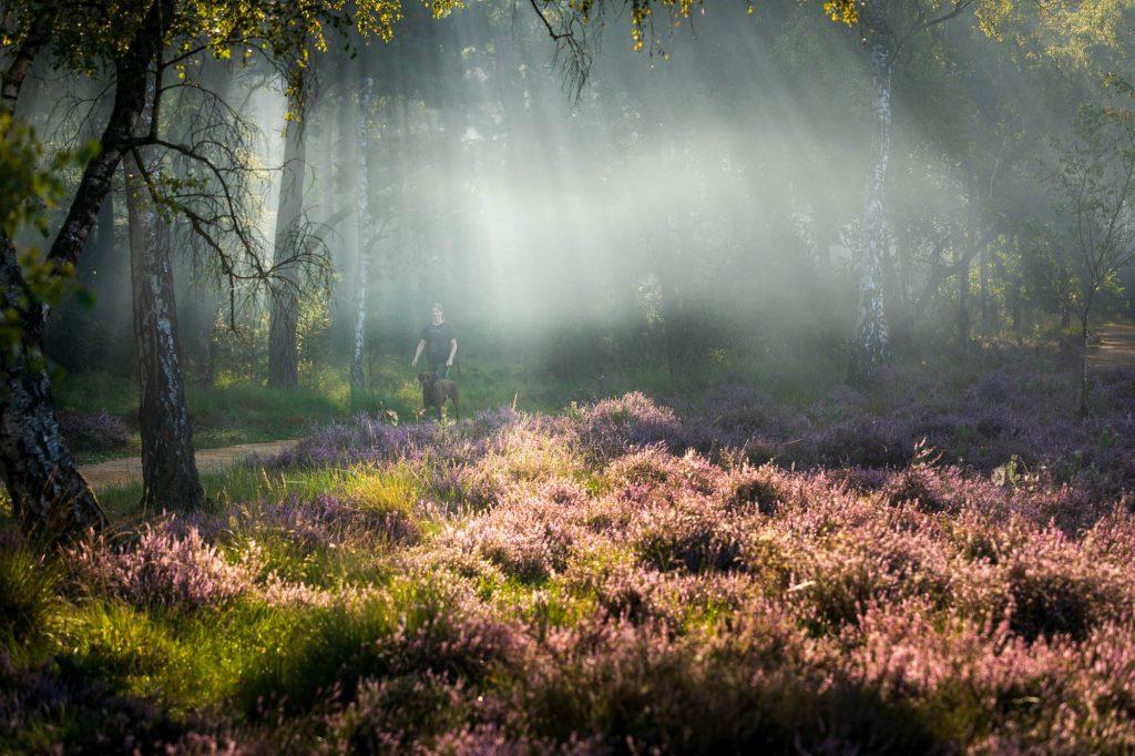 Fotoshoot met nevel op de paarse heide.